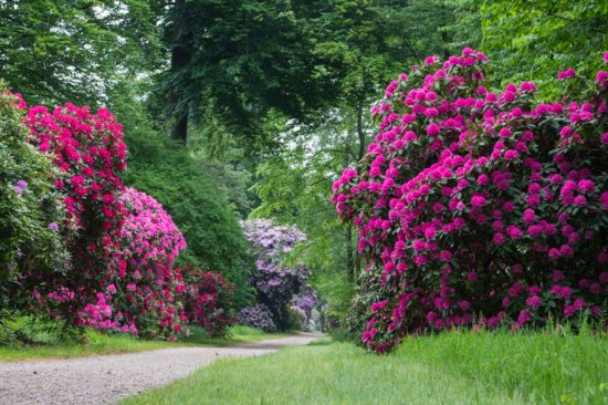 rhododendronpark-other-18