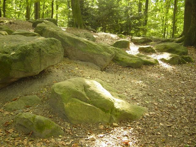 Aaper Wald- Frauensteine.JPG